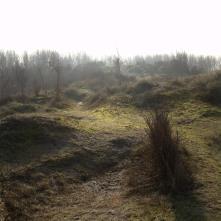 Natura naturata #7. Joseph Stubbenpark, Lambda/Diasec, 50x50 cm
